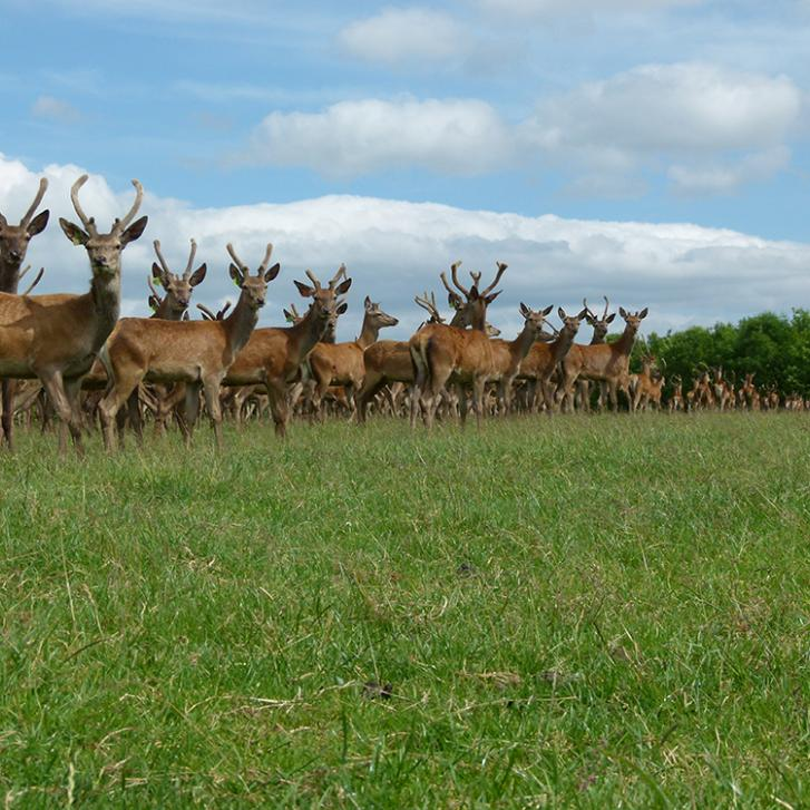 Game market on the increase thanks to Christmas venison sales