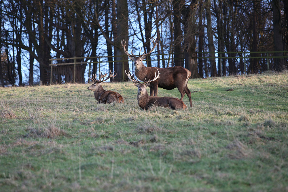 Stags Harewood House 5
