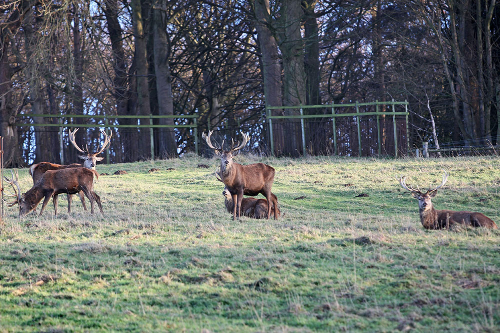 Stags Harewood House 6