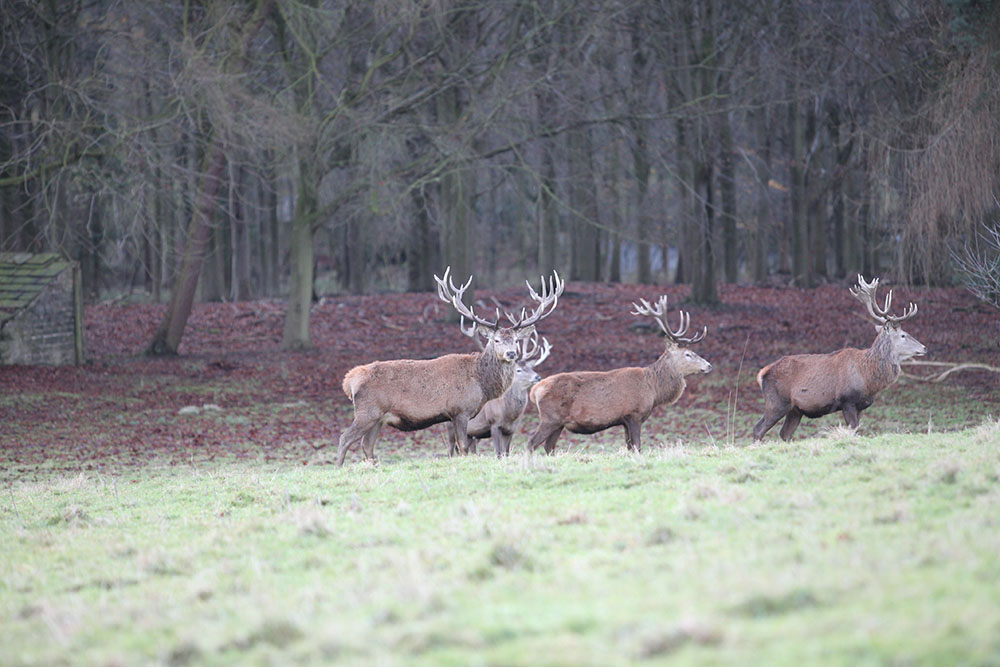 Stag Harewood House