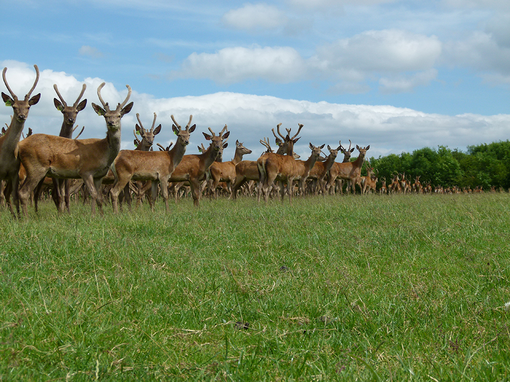 deer farm image 3