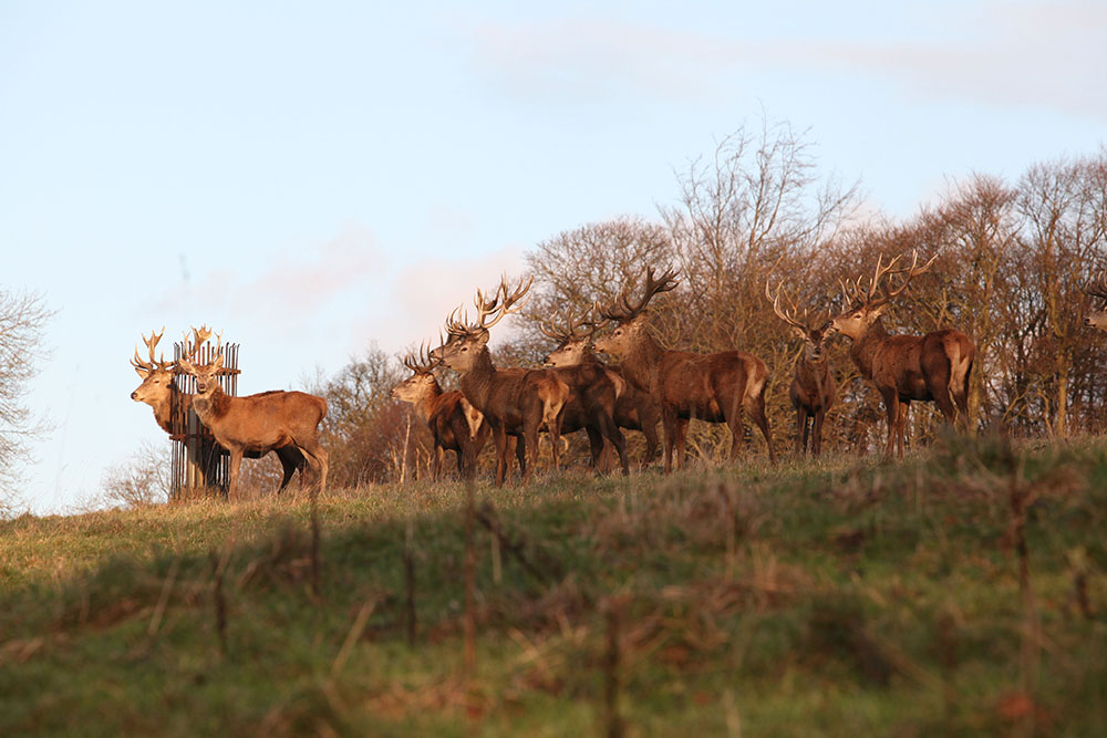 Stags Harewood House 4