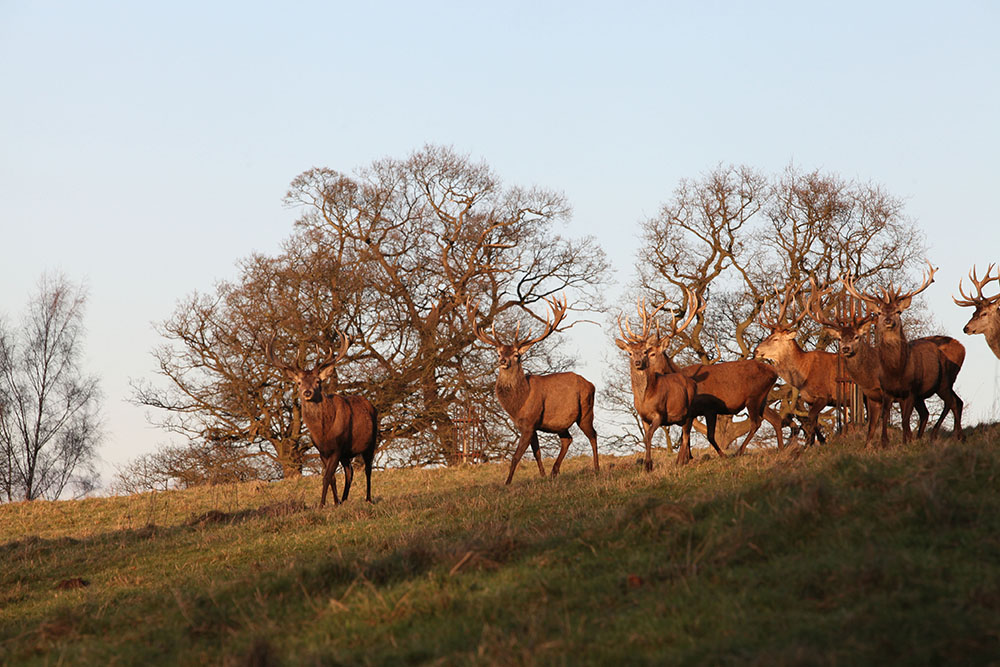 Stags Harewood House 3
