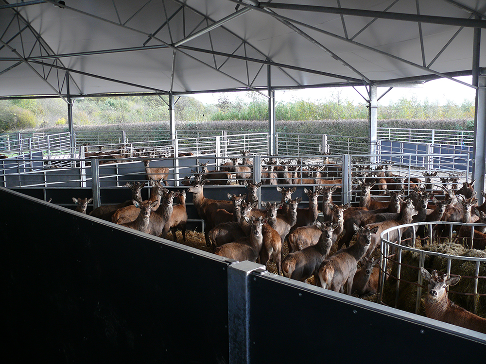 Deer in winter pen at Low Farm